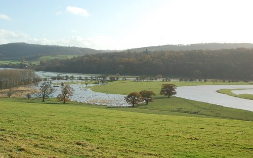 Floods can cause large quantities of water to flow over green land, destroying wildlife habitats and natural landscapes