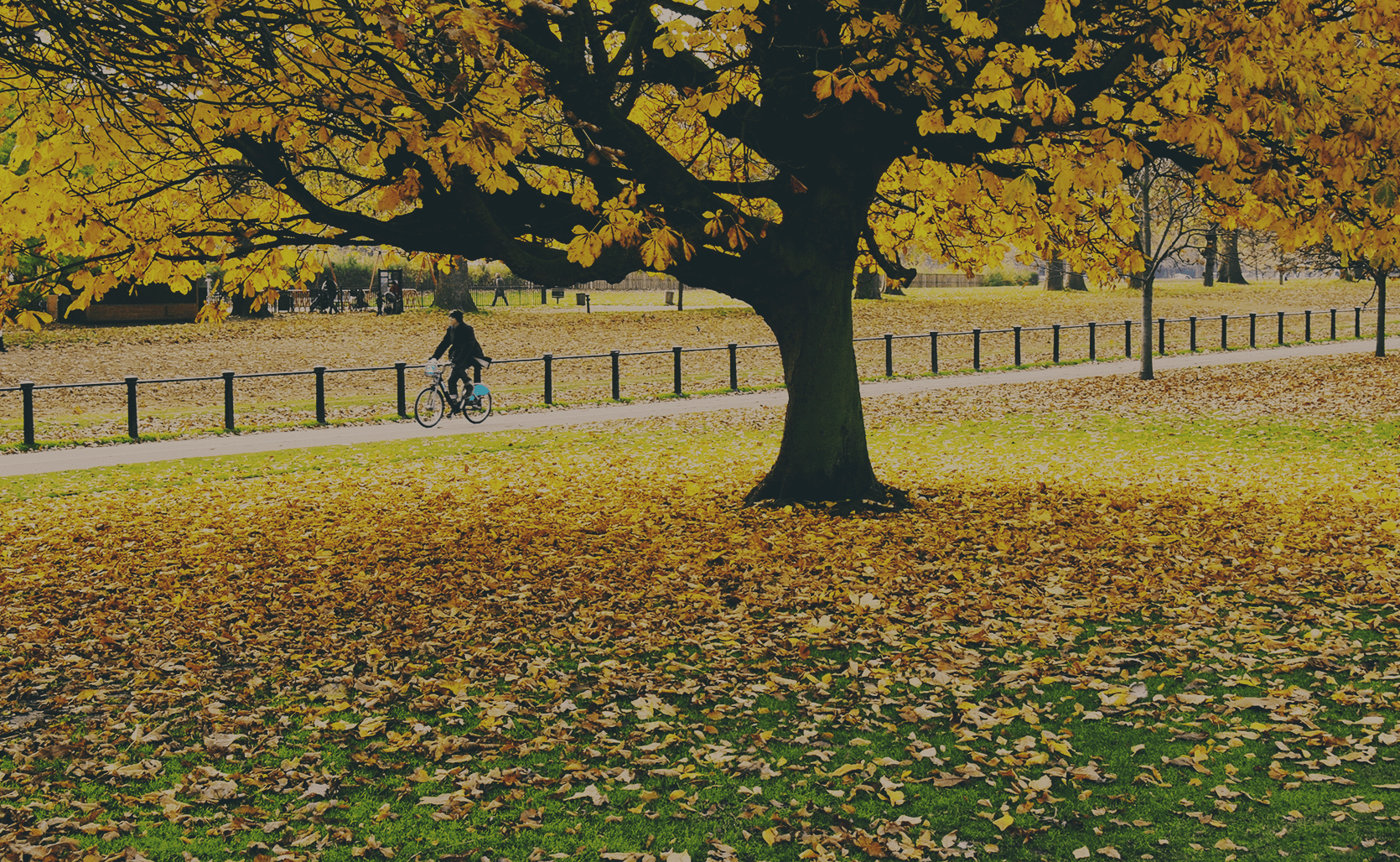 Tree in a park in autumn